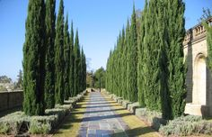 greystone mansion wedding beverly hills, the landscape allée Cypress Gardens, Chic Vintage Brides, Dream House Interior, Tuscan Wedding, Wedding Set Up, California Wedding Venues, Formal Gardens, Beverly Hills, Park