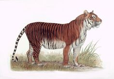Javen Tiger (ohhhhhh with Bacon please) !!!!