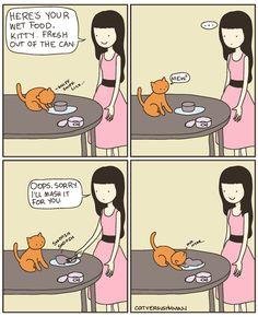 cat versus human