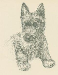Scottie Dog Print by K.F Barker- 1940s.