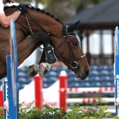 Amazing shot!!  What a talented jumper ( really gets those front knees up really high!! )