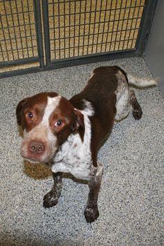 Adopt A Dog In Salt Lake City Utah