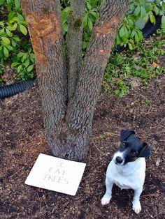 I Eat Trees - Jack Shaming