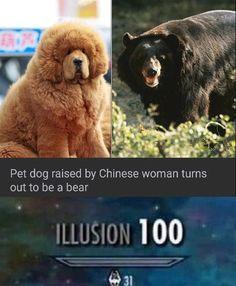 Doggo in disguise