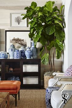 Fiddle Leaf fig tree & Chinese ginger jars in a home in Naples Florida by Summer Thornton | interior architecture and interior design by Summer Thornton Design | www.SummerThorntonDesign.com