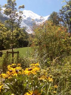 El blog de Ana H: Diario de viaje: Suiza