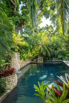 900 Tropical Gardens Ideas Tropical Garden Tropical Landscaping Tropical