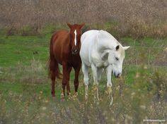 Bom dia! 😊 #cavalos  #liberdade #coisasqueagentevê #pelocaminho #photography #photo #thingsisee #walkingaround #horses #freedom #alcochete #igersportugal #gerador #instaphoto