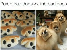 funny puns hilarious / funny puns ` funny puns hilarious ` funny puns pick up lines ` funny puns jokes ` funny puns for adults ` funny puns for boyfriend ` funny puns clever ` funny puns humor Funny Animal Jokes, Cute Funny Animals, Stupid Funny Memes, Funny Animal Pictures, Funny Relatable Memes, Animal Memes, Cute Baby Animals, Haha Funny, Funny Cute