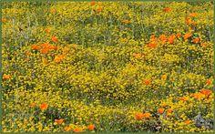 Happy Flower Field by tdlucas5000