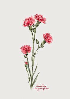 tattoos do u dia de couple tattoos tattoos and body art leg tattoos Carnation Drawing, Carnation Flower Tattoo, Flower Tattoos, Flower Art, Lotus Flower, Illustration Blume, Botanical Illustration, Body Art Tattoos, Sleeve Tattoos