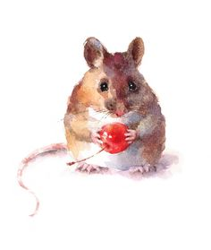 Cute Mouse Holding A Berry Watercolor Animal Illustration Hand Painted Isolated On White Background Stock Illustration - Illustration of small, eating: 66907729 - Summertrends. Mouse Illustration, Watercolor Illustration, Watercolor Art, Simple Watercolor, Watercolor Background, Watercolor Landscape, Watercolor Flowers, Animal Sketches, Animal Drawings