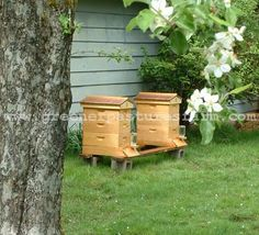 I'd love to have a beehive! This year we're kickstarting our Mason Bees.  We're  hoping for better luck than last  year.
