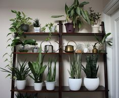 plant shelf - via Darryl Cheng featured on The Sill blog
