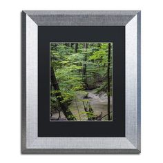 "Trademark Art ""Rainy Day in the Forest"" by Kurt Shaffer Framed Photographic Print Size: 14"" H x 11"" W x 0.5"" D"