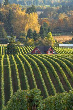 Lovely Farm