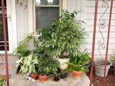 Sacar las plantas de interior 1
