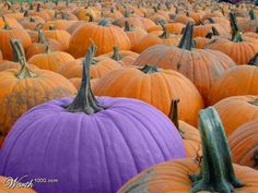 For Epilepsy Awareness: The Purple Pumpkin Project - I'm going to do one this week for the porch :)