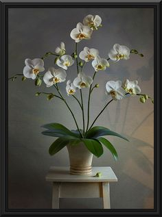 Orchid Flower Painting - In this oil painting we are graced by an Orchid Flower portrait with white colored petals in the shape of a heart. The dark colors of the painting gives the flowers a brighter look, which makes them glow against the vase.