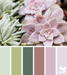 succulent hues (design seeds)