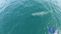 Humpback whale shoots rainbow. : BeAmazed