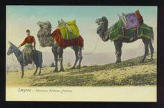 SMYRNA, TURKEY ~ MAN WITH DONKEY & 2 CAMELS ~ c. 1910's.      Propiedad y cortesía de Archivos Rodríguez LLC, archivofotograficodepuertorico.com