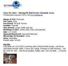 Stray Pet Alert – Missing Pit Bull Terrier  Glendale Area