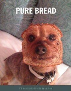 Pure bread dog. Funny.