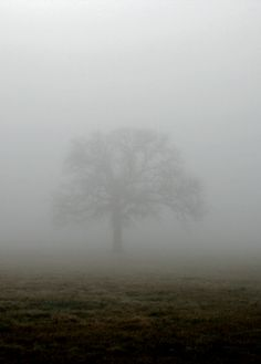 """I just love a lone tree in a field that has """"good bones"""" and watch it change through the seasons."""