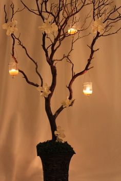 manzanita trees make a great center piece and it can be useful. I would like to hang from its branches individual cards for guests to leave a comment. I would like to paint it white to add some magic and have tea lights around it, not hanging from it as shown in the picture.