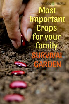 If you are planning to have a Family survival garden this year, make sure to plant these fruits, vegetables and legumes.  #survival #prepping #survivalgarden #gardening