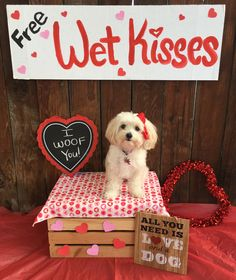 Some Helpful Ideas For Training Your Dog. Loving your dog does not mean you are willing to let him go hog wild on your possessions. That said, your dog doesn't feel the same way. Valentines Day Dog, Valentines Day Pictures, Valentine Ideas, Valentine Mini Session, Puppy Pictures, Dog Photos, Dog Calendar, Valentine Picture, Dog Daycare