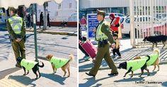 Policiais adotam e dão um emprego para vira-latas