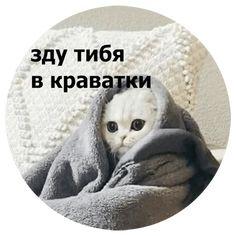 True Memes, Cat Memes, Funny Memes, Animal Memes, Funny Animals, Cute Animals, Hello Memes, Sweet Memes, Russian Memes