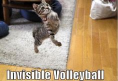 48 Hilarious Cats With Invisible Items. Killed Me Funny Cats, Funny Animals, Cute Animals, Crazy Cat Lady, Crazy Cats, Volleyball Jokes, Play Volleyball, Sister Quotes Funny, Funny Quotes