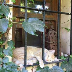 💗 cÅt§ in 🐱🐾 the Window Cool Cats, Cute Cats And Kittens, I Love Cats, Pretty Cats, Beautiful Cats, Animals And Pets, Cute Animals, Animal Gato, Cat Window