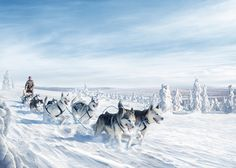 A project shot for promoting Finland as a travel/holiday destination. Panning For Gold, Pet Parade, Whitewater Rafting, City Landscape, Holiday Destinations, Holiday Travel, Finland, Wilderness, Husky