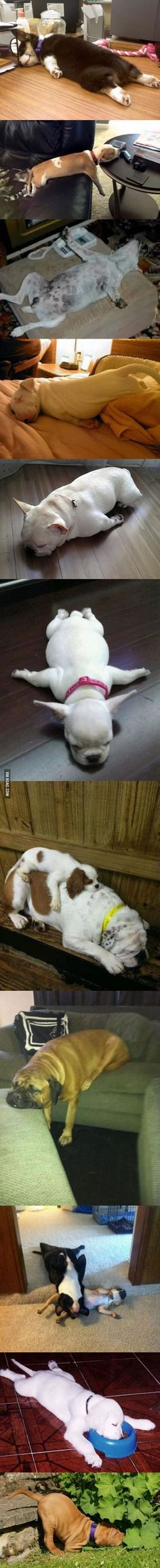 """So... here's what """"dog tired"""" looks like..."""