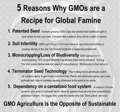 The use of genetically engineered seeds is directly linked to the suicide of many thousands of impoverished Indian farmers. Far from being the answer to feeding the world, GMOs could actually trigger a famine the likes of which the world has never been seen. GMOs benefit no one except a few people in the upper echelons of the Biotech Empire.