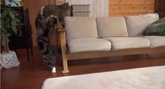 """We wonder if Maru and Hana meow """"haha you missed me"""" while playing their game of tag."""