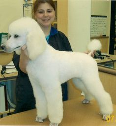 Different Styles Poodle Grooming | styles - Poodle Forum - Standard Poodle, Toy Poodle, Miniature Poodle ...