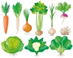 Different types of vegetables Free Vecto. Games For Kids, Art For Kids, Crafts For Kids, Kreative Jobs, Duck Crafts, Design Plat, Vegetable Illustration, Different Types Of Vegetables, Food Wallpaper