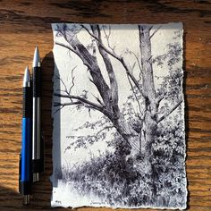 #secretlifeoftrees- day 54 out of 126, #pen on paper