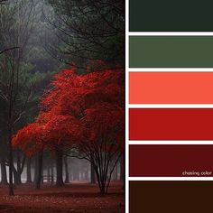 Shades Of Scarlet Autumn (Photo Credit: www.flickr.com/photos/yein) #chasingcolor #colorthemes #colorful #color #palette #colorpalette #shades #tones #hues #colorinspiration #inspiration #creative #art #photography #design #theme #autumn #fall #nature #forest #red #scarlet #trees #green #pinetrees