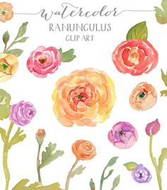 Ranunculus Watercolor Flowers  Clip Art by AngieMakes on Etsy, $6.00
