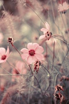 flowers macro depth of field wallpaper – Nature Fields HD Desktop Wallpaper Natur Wallpaper, Macro Flower, Soft Summer, Prado, Belle Photo, Cover Photos, Cute Wallpapers, Champs, Pink Flowers