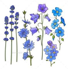 Buy Hand Drawn Blue Flowers by Sabelskaya on GraphicRiver. Set of hand drawn blue flowers – lavender, forget me not, bell, cornflowers, sketch style vector illustration isolate. Woodland Flowers, Meadow Flowers, Flowers Garden, Wildflowers, Blue Flower Tattoos, Blue Bell Flowers, Delphinium Flowers, Illustration Blume, Flower Sketches