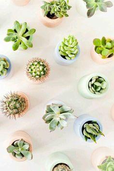 #succulents #plants