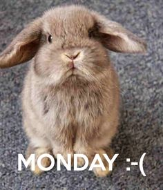MONDAY :-(