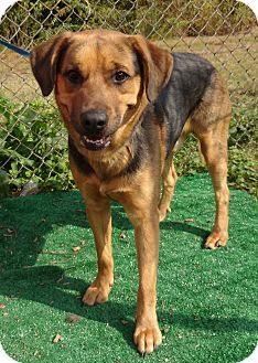 Act quickly to adopt  Pets at this Shelter may be held for only a short time Marietta, GA - German Shepherd Dog Mix. Meet COOLIO a Dog for Adoption.
